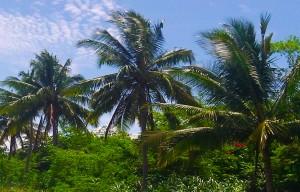 Jamaika-Rundreisen