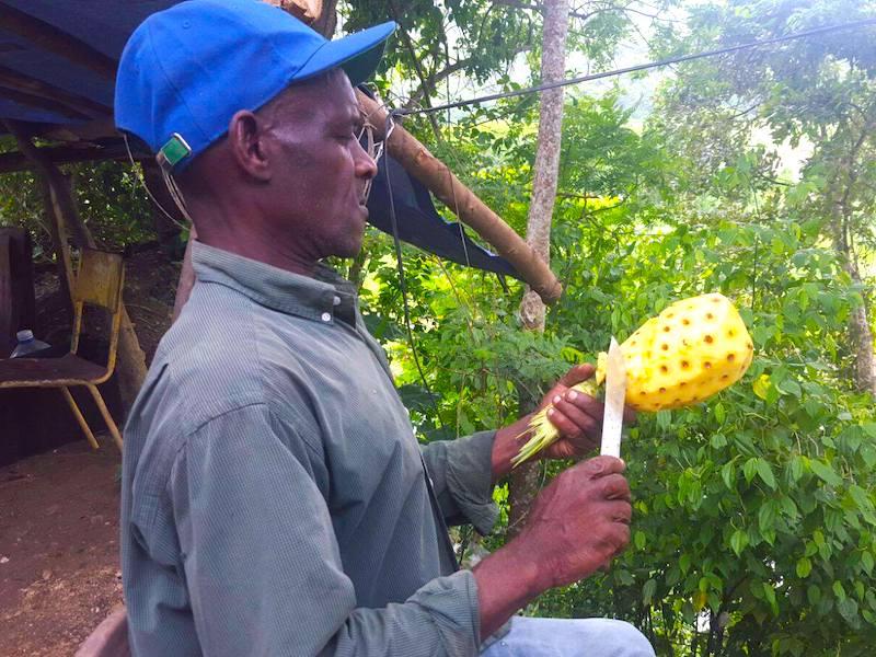 Nachhaltige Jamaikareisen - Verantwortlich, ökologisch und fair