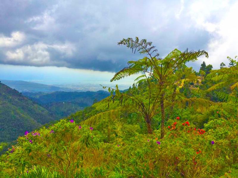 Jamaika Lifestyle in den Blue Mountains