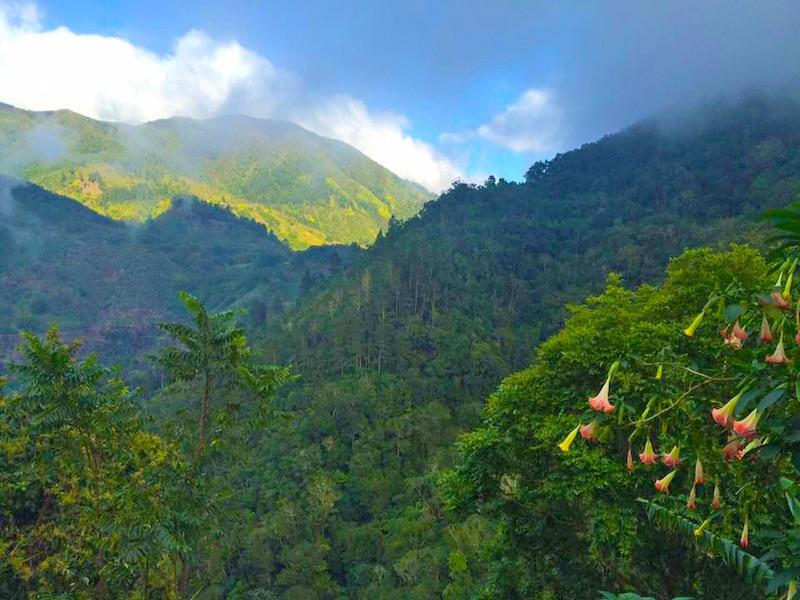 Jamaika Lifestyle Blue Mountains