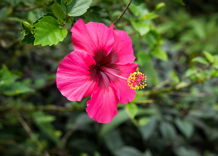 Tropische Pflanzen in Jamaika