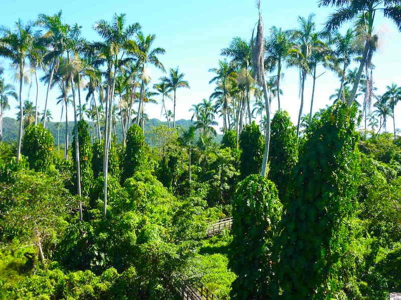 Negril Royal Palm Reserve